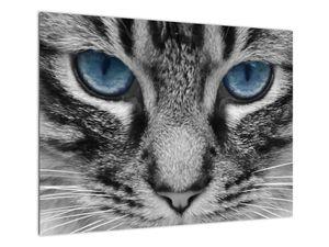 Obraz kočky (V021221V7050)