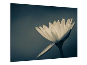 Obraz květiny (V021223V7050)