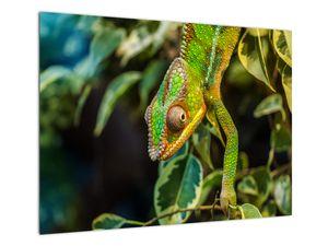 Obraz chameleona (V021236V7050)
