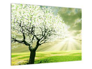 Obraz stromu na lúke (V021282V7050)