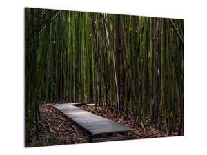 Obraz - Medzi bambusy (V021324V7050)