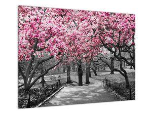 Obraz stromů Magnolíie (V021344V7050)