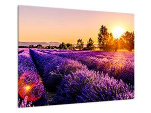 Obraz levandulového pole, Provence (V021590V7050)