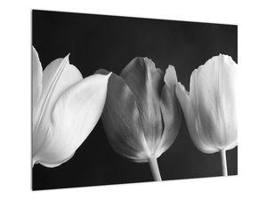 Kép - fekete-fehér tulipán virág (V021916V7050)