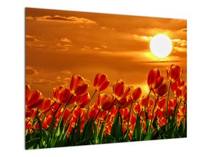 Obraz rozkvetlého lánu s tulipány (V021920V7050)