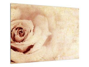 Obraz - Květ růže pro zamilované (V021945V7050)