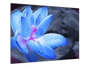 Obraz květu v detailu (V021974V7050)