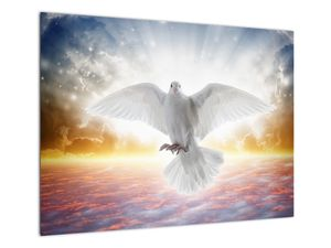 Obraz holubice (V022013V7050)