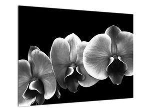 Obraz květu orchideje (V022015V7050)