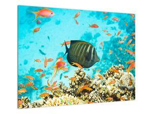 Obraz podmořského světa (V022109V7050)