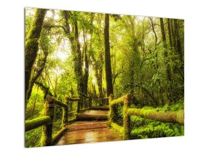 Obraz mechové džungle (V022161V7050)