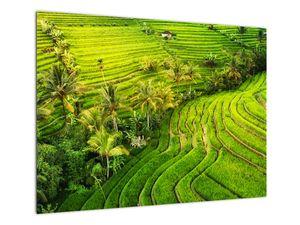 Obraz - Rýžové terasy (V022394V7050)