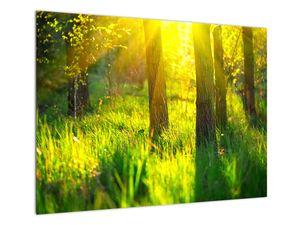Obraz - Jarní probouzení lesa (V022484V7050)