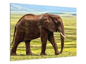 Obraz slona (V022595V7050)