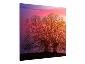 Obraz stromů v mlze (V020088V7070)