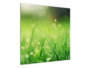 Obraz - rosa na trávě (V020169V7070)