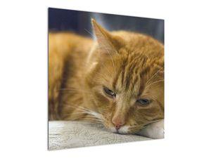 Obraz mačky (V020192V7070)