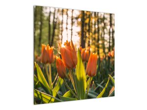Obraz - kvety tulipánov (V020195V7070)