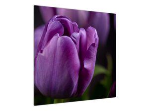 Obraz květů tulipánů (V020215V7070)
