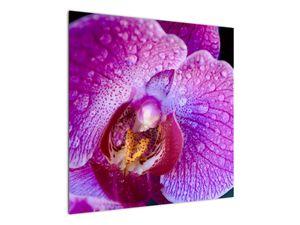 Detailní obraz květu orchideje (V020314V7070)