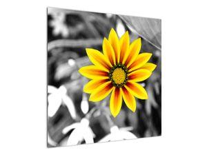 Obraz žluté květiny (V020361V7070)