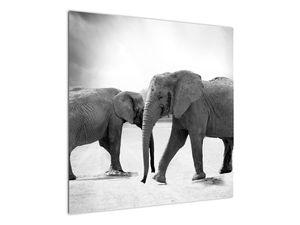 Obraz - černobílí sloni (V020398V7070)