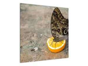 Obraz motýla (V020454V7070)