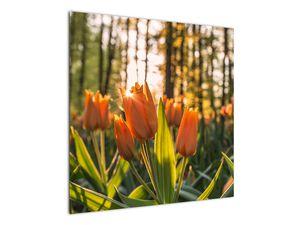 Obraz - oranžové tulipány (V020552V7070)