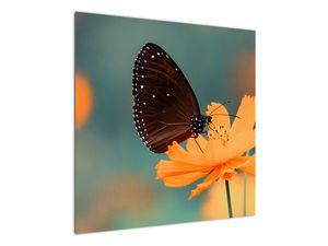 Obraz - motýl na oranžové květině (V020577V7070)