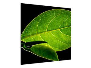 Obraz - zelený list (V020628V7070)
