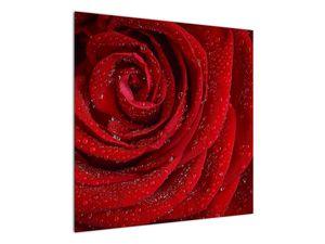Obraz - detail růže (V020684V7070)