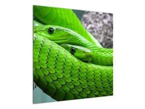 Obraz zelených hadů (V020689V7070)