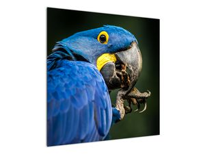 Obraz papouška (V020714V7070)