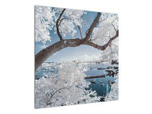 Obraz zasněženého stromu u vody (V020718V7070)