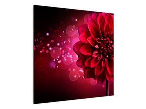 Obraz červené kvety (V020807V7070)