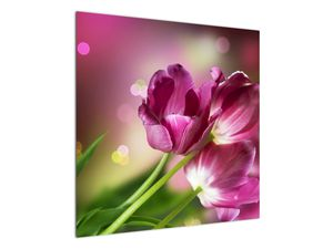 Obraz růžových tulipánů (V020887V7070)
