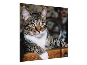 Obraz kočky (V020889V7070)