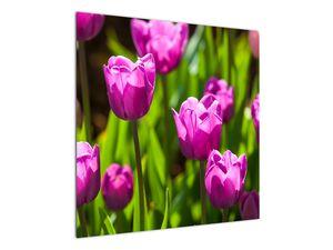 Obraz tulipánov na lúke (V020893V7070)