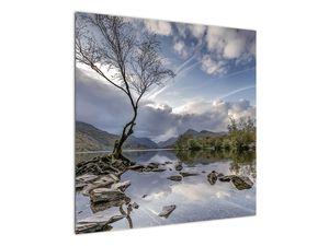 Obraz řeky se stromem (V020917V7070)