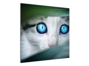 Obraz kočky (V020944V7070)