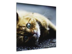 Obraz kočky (V020963V7070)