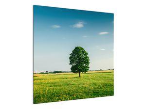 Obraz stromu na louce (V021171V7070)