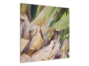 Obraz veverky na stromu (V021177V7070)