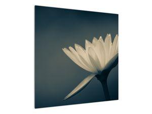 Obraz květiny (V021223V7070)
