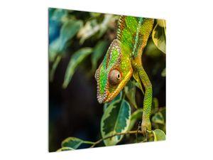 Obraz chameleona (V021236V7070)