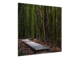Obraz - Medzi bambusy (V021324V7070)
