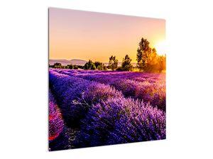 Obraz levandulového pole, Provence (V021590V7070)