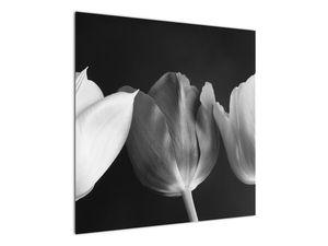 Kép - fekete-fehér tulipán virág (V021916V7070)