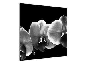 Obraz květu orchideje (V022015V7070)