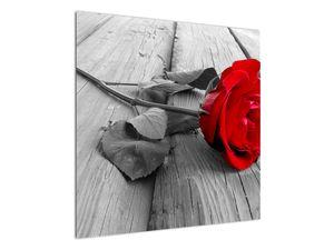 Slika crvene ruže (V022288V7070)